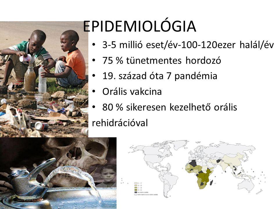 EPIDEMIOLÓGIA 3-5 millió eset/év-100-120ezer halál/év 75 % tünetmentes hordozó 19. század óta 7 pandémia Orális vakcina 80 % sikeresen kezelhető oráli