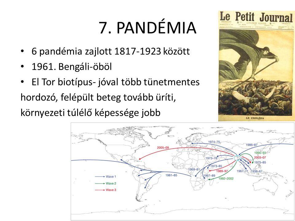 7. PANDÉMIA 6 pandémia zajlott 1817-1923 között 1961. Bengáli-öböl El Tor biotípus- jóval több tünetmentes hordozó, felépült beteg tovább üríti, körny