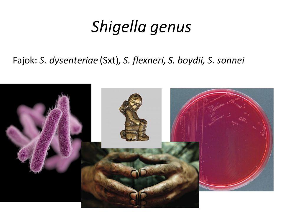 Shigella genus Fajok: S. dysenteriae (Sxt), S. flexneri, S. boydii, S. sonnei