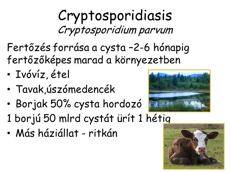Cryptosporidiasis Cryptosporidium parvum Fertőzés forrása a cysta –2-6 hónapig fertőzőképes marad a környezetben Ivóvíz, étel Tavak,úszómedencék Borja