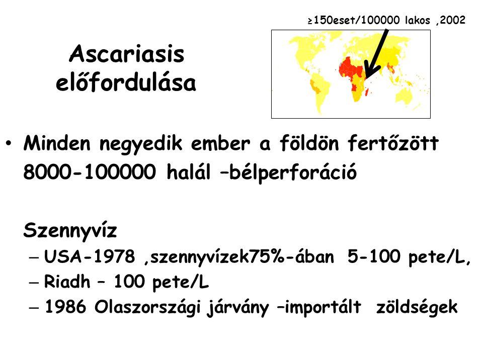 Ascariasis előfordulása Minden negyedik ember a földön fertőzött 8000-100000 halál –bélperforáció Szennyvíz – USA-1978,szennyvízek75%-ában 5-100 pete/
