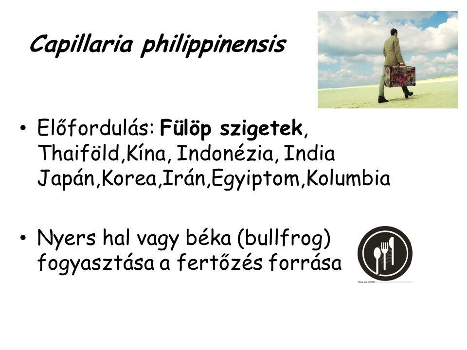 Capillaria philippinensis Előfordulás: Fülöp szigetek, Thaiföld,Kína, Indonézia, India Japán,Korea,Irán,Egyiptom,Kolumbia Nyers hal vagy béka (bullfro