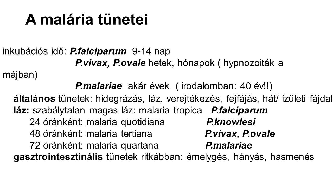 A malária tünetei inkubációs idő: P.falciparum 9-14 nap P.vivax, P.ovale hetek, hónapok ( hypnozoiták a májban) P.malariae akár évek ( irodalomban: 40