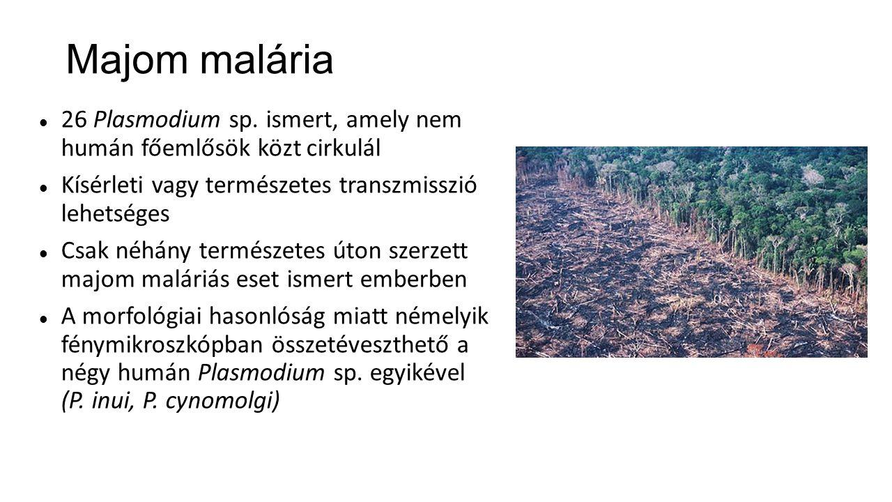 Majom malária 26 Plasmodium sp. ismert, amely nem humán főemlősök közt cirkulál Kísérleti vagy természetes transzmisszió lehetséges Csak néhány termés