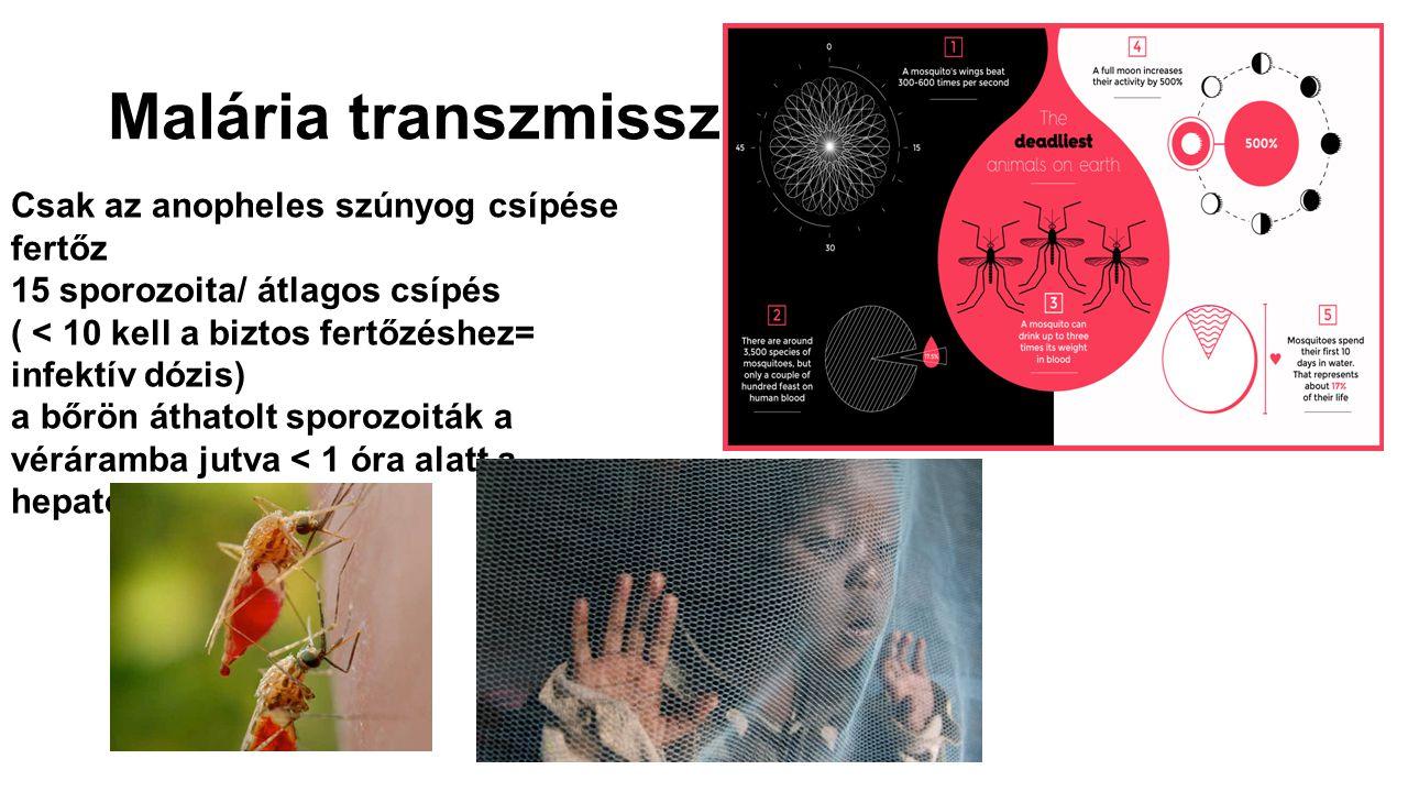 Malária transzmisszió Csak az anopheles szúnyog csípése fertőz 15 sporozoita/ átlagos csípés ( < 10 kell a biztos fertőzéshez= infektív dózis) a bőrön
