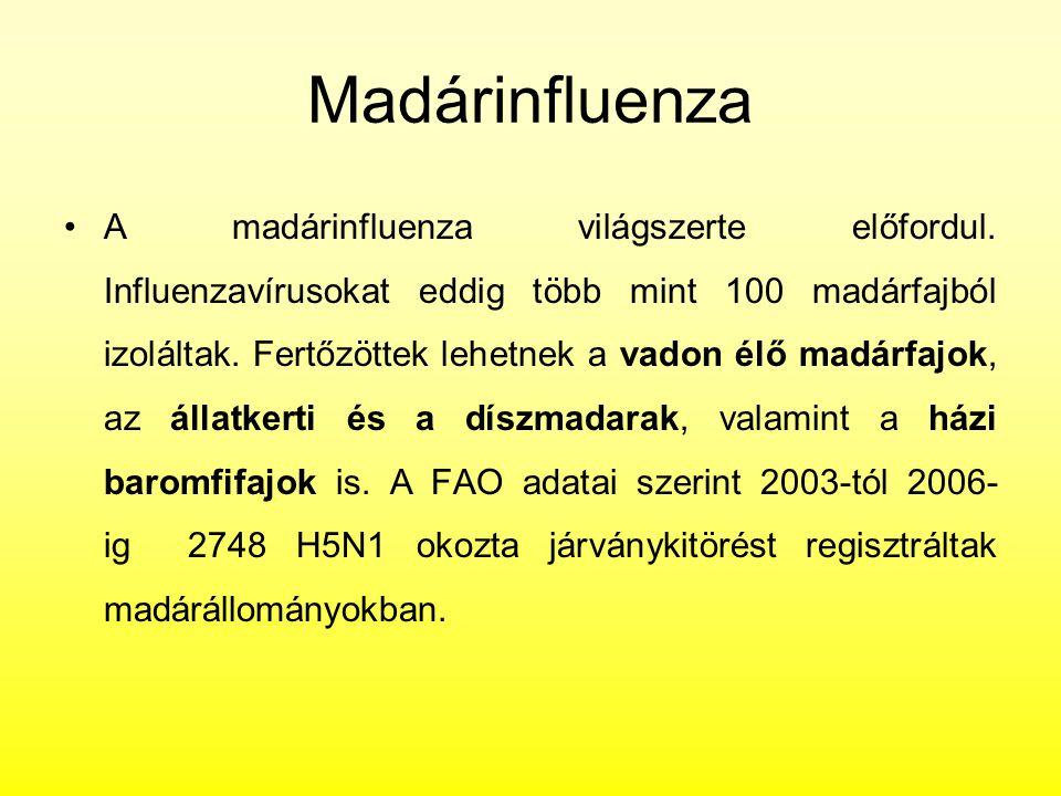 Madárinfluenza A madárinfluenza világszerte előfordul. Influenzavírusokat eddig több mint 100 madárfajból izoláltak. Fertőzöttek lehetnek a vadon élő