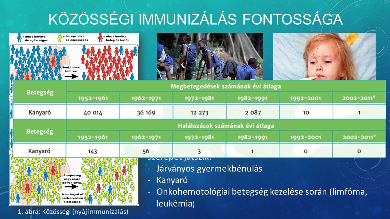 KÖZÖSSÉGI IMMUNIZÁLÁS FONTOSSÁGA -Nagy jelentősége van -Kis esély a fertőzés terjedésére -Immunizálásból kimaradt populációk miatt megszűnhet Szerepet