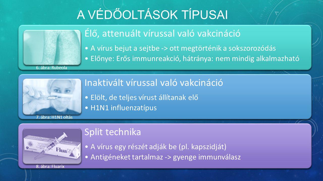 A VÉDŐOLTÁSOK TÍPUSAI Élő, attenuált vírussal való vakcináció A vírus bejut a sejtbe -> ott megtörténik a sokszorozódás Előnye: Erős immunreakció, hátránya: nem mindig alkalmazható Inaktivált vírussal való vakcináció Elölt, de teljes vírust állítanak elő H1N1 influenzatípus Split technika A vírus egy részét adják be (pl.