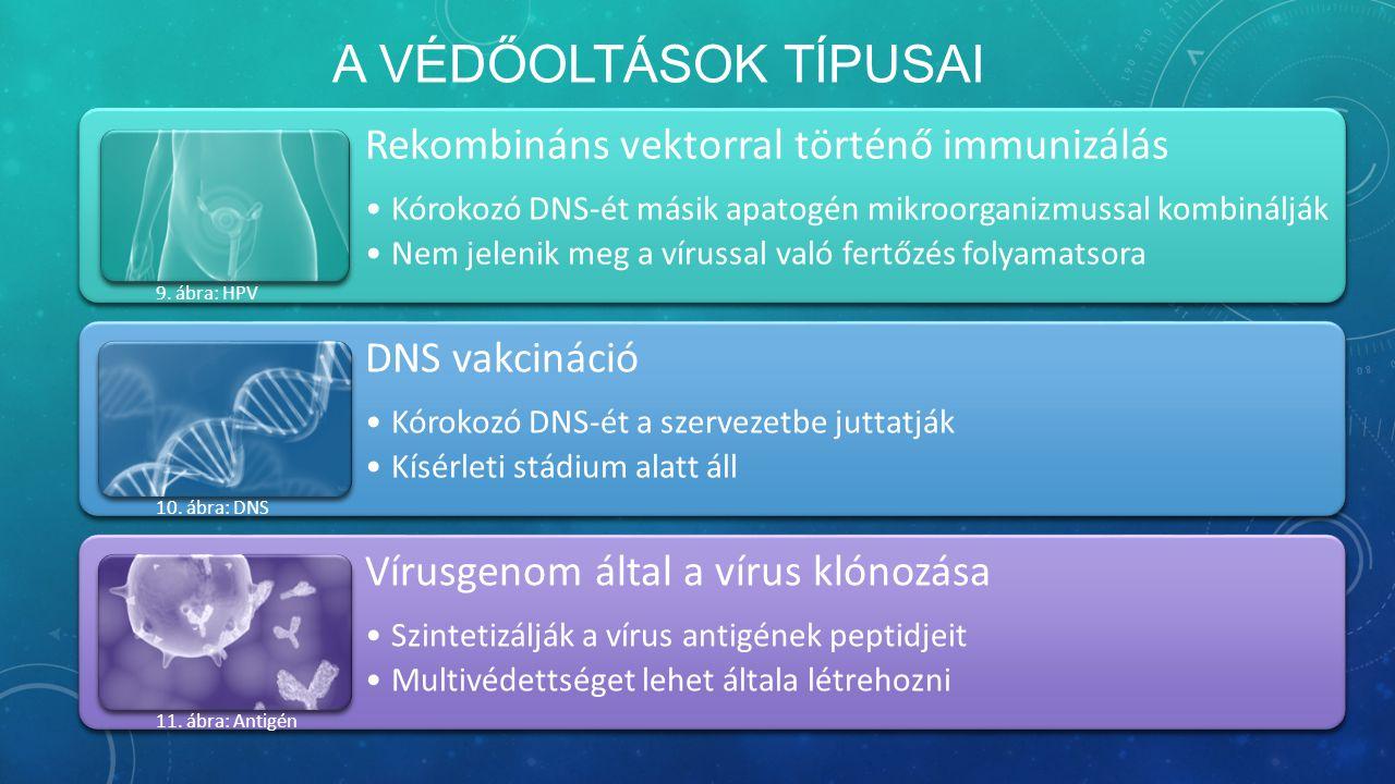A VÉDŐOLTÁSOK TÍPUSAI Rekombináns vektorral történő immunizálás Kórokozó DNS-ét másik apatogén mikroorganizmussal kombinálják Nem jelenik meg a vírussal való fertőzés folyamatsora DNS vakcináció Kórokozó DNS-ét a szervezetbe juttatják Kísérleti stádium alatt áll Vírusgenom által a vírus klónozása Szintetizálják a vírus antigének peptidjeit Multivédettséget lehet általa létrehozni 9.