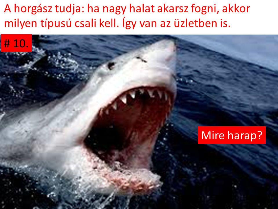 A horgász tudja: ha nagy halat akarsz fogni, akkor milyen típusú csali kell. Így van az üzletben is. Mire harap? # 10.