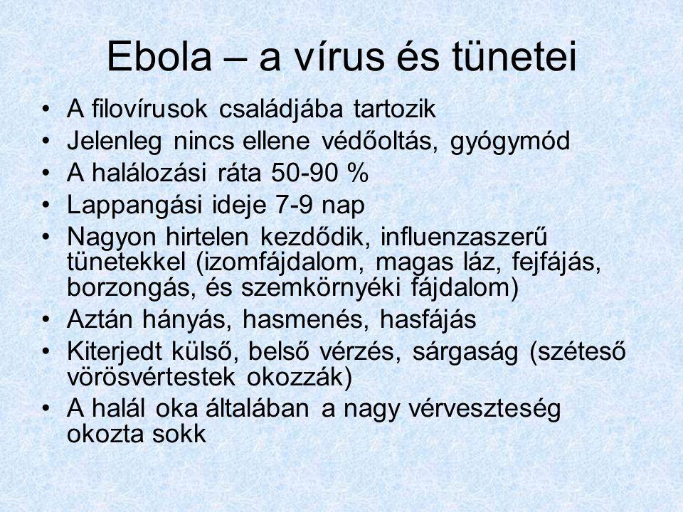Ebola – a vírus és tünetei A filovírusok családjába tartozik Jelenleg nincs ellene védőoltás, gyógymód A halálozási ráta 50-90 % Lappangási ideje 7-9 nap Nagyon hirtelen kezdődik, influenzaszerű tünetekkel (izomfájdalom, magas láz, fejfájás, borzongás, és szemkörnyéki fájdalom) Aztán hányás, hasmenés, hasfájás Kiterjedt külső, belső vérzés, sárgaság (széteső vörösvértestek okozzák) A halál oka általában a nagy vérveszteség okozta sokk