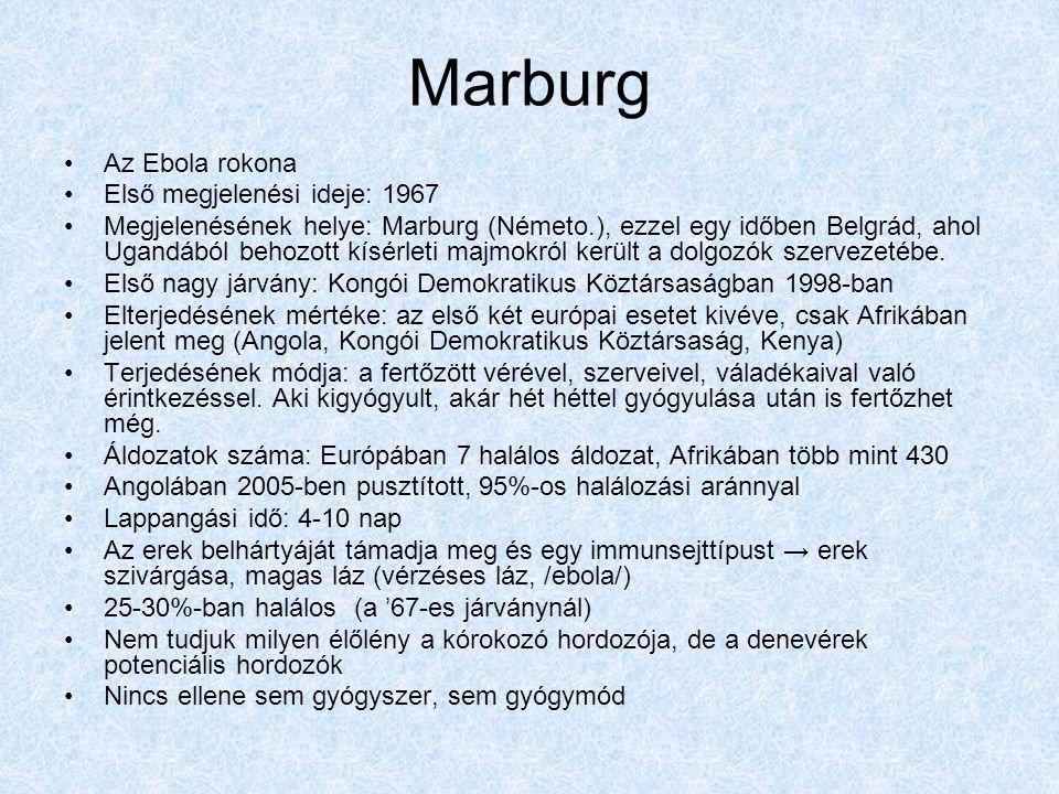 Marburg Az Ebola rokona Első megjelenési ideje: 1967 Megjelenésének helye: Marburg (Németo.), ezzel egy időben Belgrád, ahol Ugandából behozott kísérleti majmokról került a dolgozók szervezetébe.