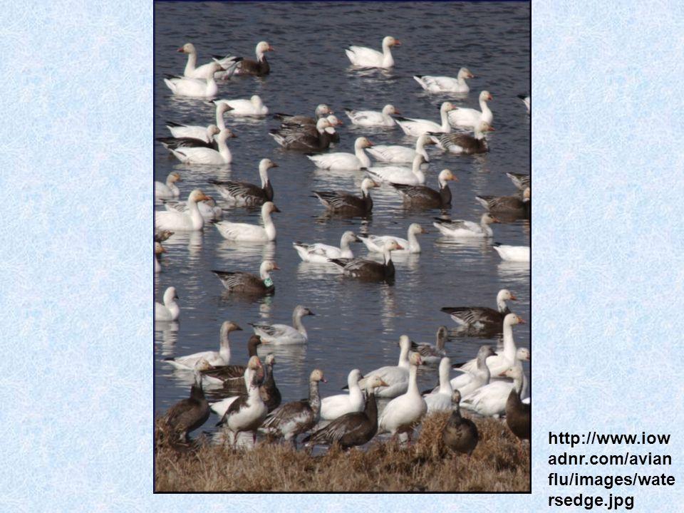 http://www.iow adnr.com/avian flu/images/wate rsedge.jpg