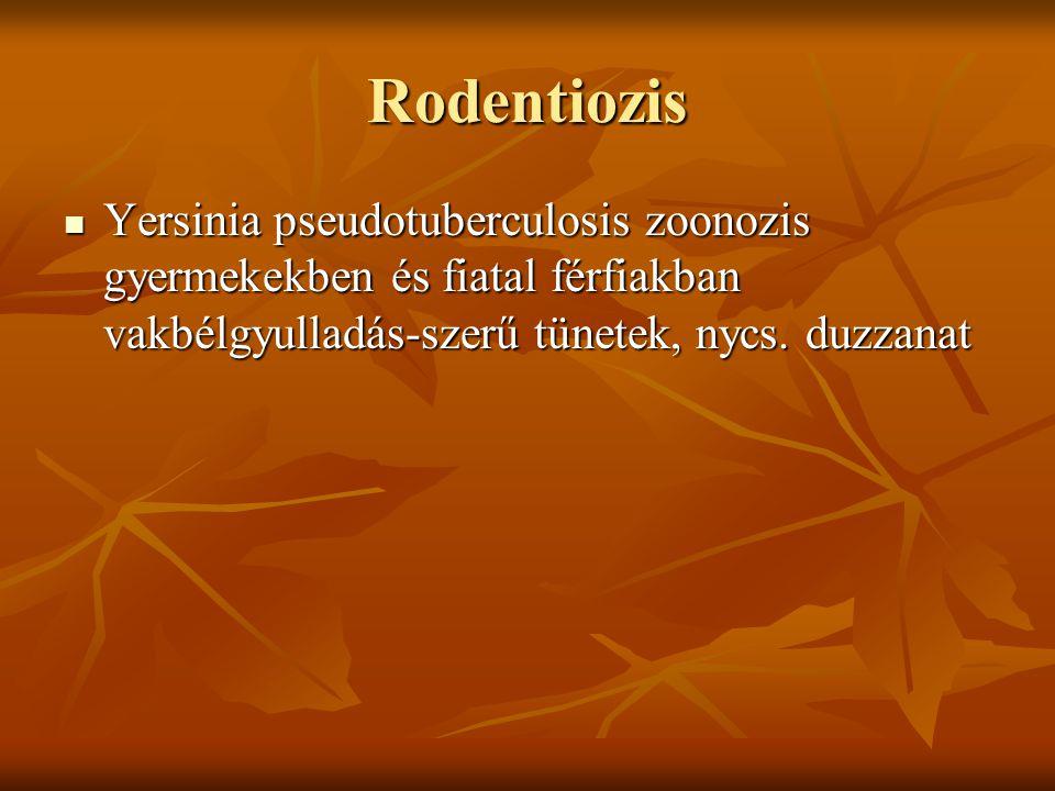 Rodentiozis Yersinia pseudotuberculosis zoonozis gyermekekben és fiatal férfiakban vakbélgyulladás-szerű tünetek, nycs. duzzanat Yersinia pseudotuberc