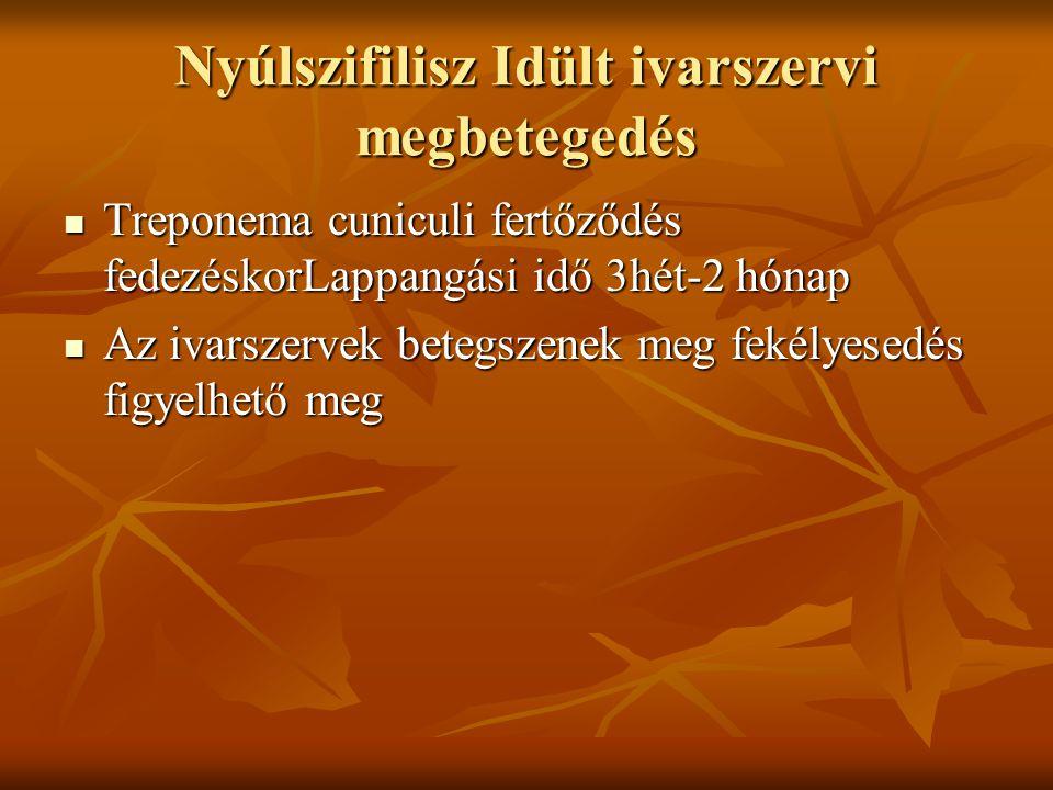 Nyúlszifilisz Idült ivarszervi megbetegedés Treponema cuniculi fertőződés fedezéskorLappangási idő 3hét-2 hónap Treponema cuniculi fertőződés fedezésk