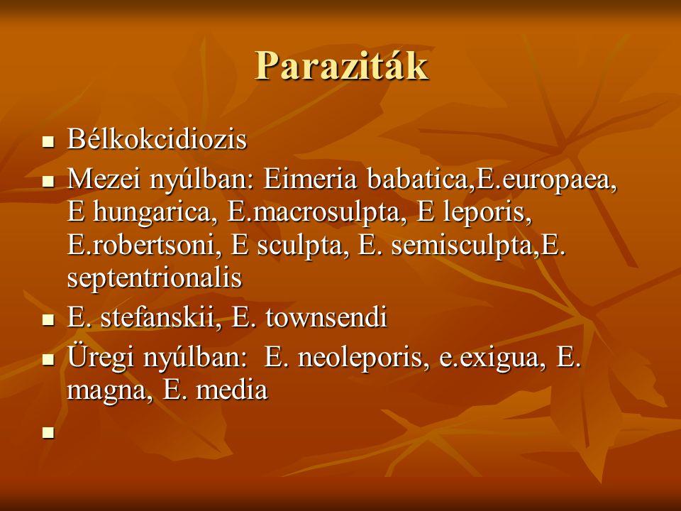 Paraziták Bélkokcidiozis Bélkokcidiozis Mezei nyúlban: Eimeria babatica,E.europaea, E hungarica, E.macrosulpta, E leporis, E.robertsoni, E sculpta, E.