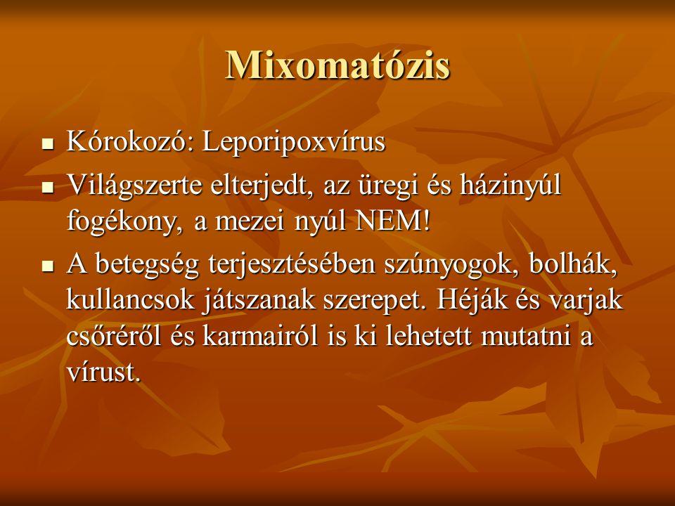 Mixomatózis Tünetek: a fertőződött állat kezdetben élénk, csak később válik bágyadttá, könnyezés, szemhéjduzzanat, orrhurut, hurutos, gennyes kötőhártyagyulladás alakul ki a fejen, és a lábakon mixödémás duzzanatok alakulnak ki.