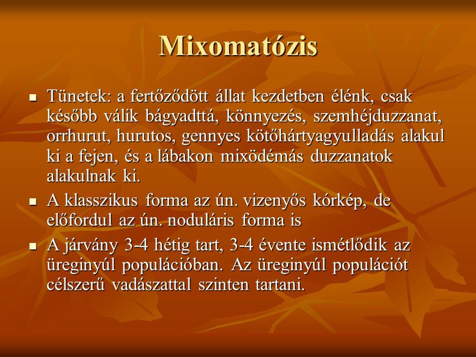 Mixomatózis Tünetek: a fertőződött állat kezdetben élénk, csak később válik bágyadttá, könnyezés, szemhéjduzzanat, orrhurut, hurutos, gennyes kötőhárt