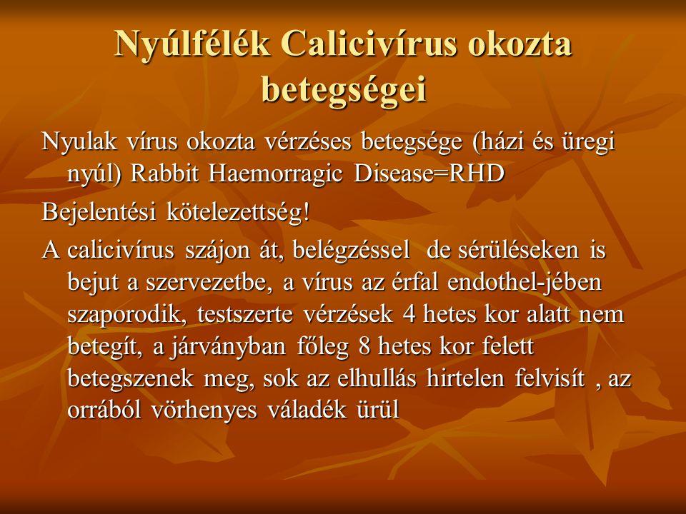 Mezei nyulak vérzéses májdisztrófiája EBHS= europan Brown Hair Syndrome mezei nyulak hirtelen elhullással járó betegsége mezei nyulak hirtelen elhullással járó betegsége Rokon az RHD vírusával, de több tulajdonságban eltér Rokon az RHD vírusával, de több tulajdonságban eltér Szept-okt fiatal növendékek hullanak el nem gyógyítható, esetleg tenyészetek vakcinázása Szept-okt fiatal növendékek hullanak el nem gyógyítható, esetleg tenyészetek vakcinázása