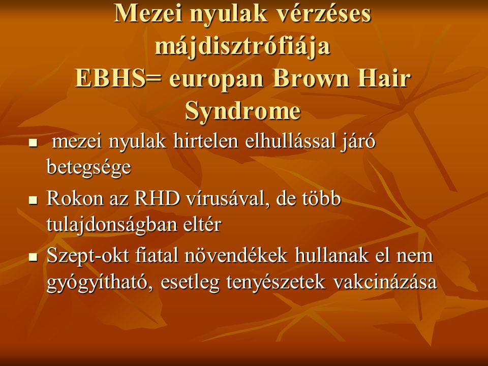 Mezei nyulak vérzéses májdisztrófiája EBHS= europan Brown Hair Syndrome mezei nyulak hirtelen elhullással járó betegsége mezei nyulak hirtelen elhullá