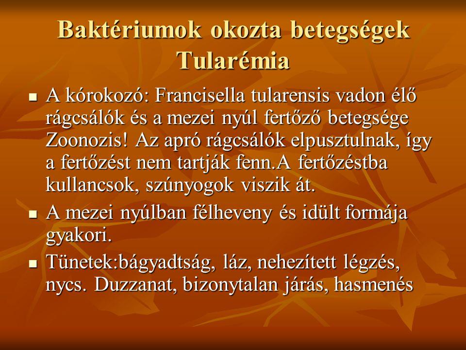 Baktériumok okozta betegségek Tularémia A kórokozó: Francisella tularensis vadon élő rágcsálók és a mezei nyúl fertőző betegsége Zoonozis! Az apró rág
