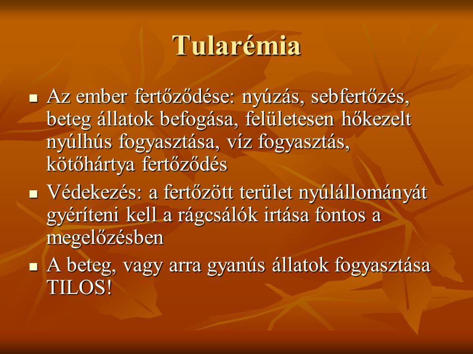 Tularémia Az ember fertőződése: nyúzás, sebfertőzés, beteg állatok befogása, felületesen hőkezelt nyúlhús fogyasztása, víz fogyasztás, kötőhártya fert