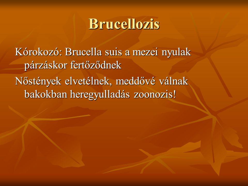 Brucellozis Kórokozó: Brucella suis a mezei nyulak párzáskor fertőződnek Nőstények elvetélnek, meddővé válnak bakokban heregyulladás zoonozis!