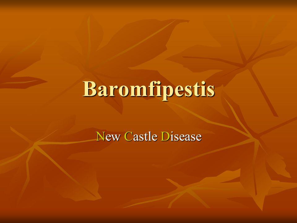 Baromfipestis Paramyxoviridae család Paramyxoviridae család Fogékony:Tyúkfélék, fácán, fogoly, galamb.