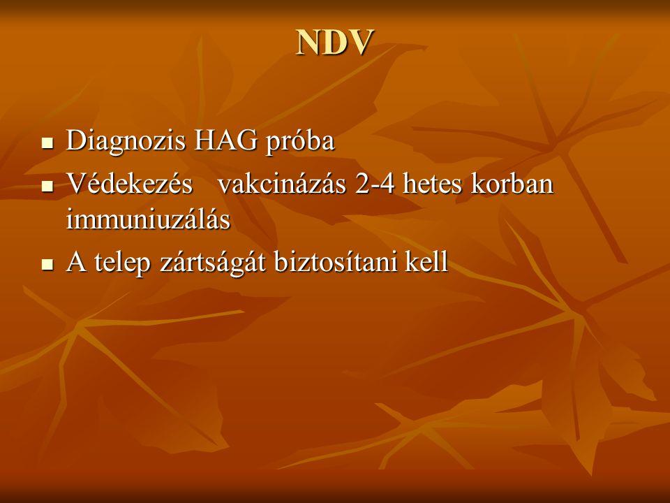 NDV Diagnozis HAG próba Diagnozis HAG próba Védekezés vakcinázás 2-4 hetes korban immuniuzálás Védekezés vakcinázás 2-4 hetes korban immuniuzálás A te