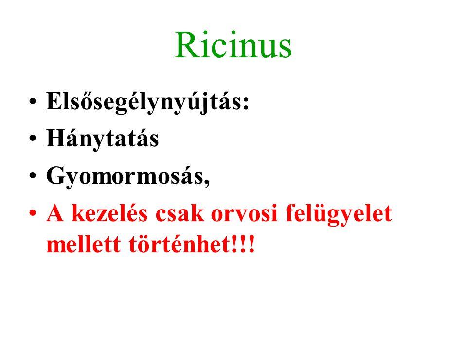 Ricinus Elsősegélynyújtás: Hánytatás Gyomormosás, A kezelés csak orvosi felügyelet mellett történhet!!!