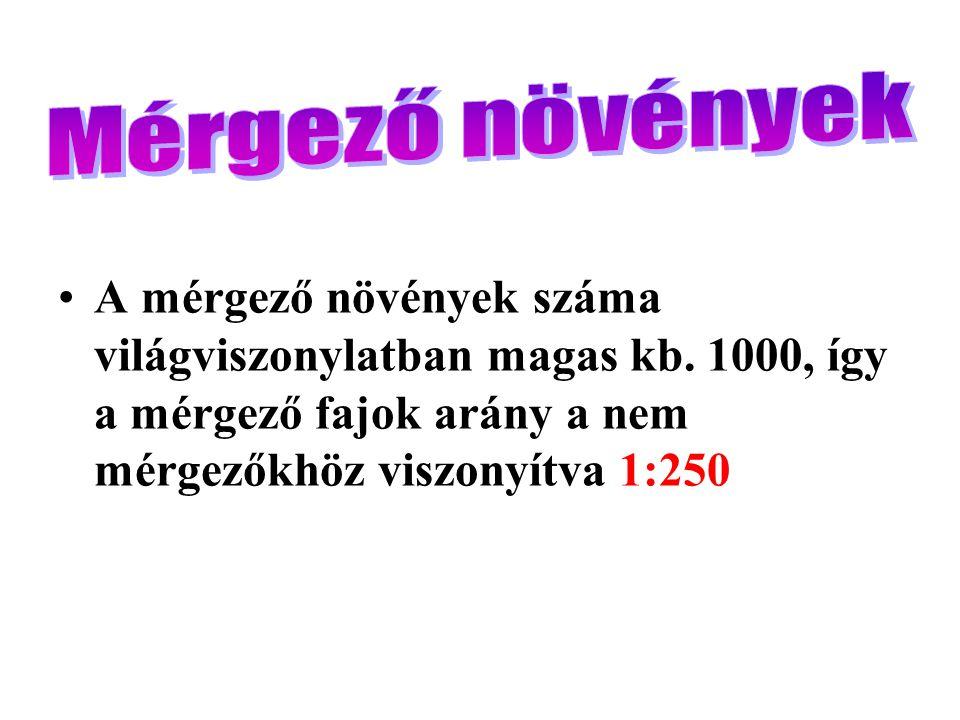 Közönséges aranyeső (Laburnum anagyroides)Laburnum anagyroides