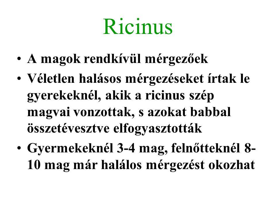 Ricinus A magok rendkívül mérgezőek Véletlen halásos mérgezéseket írtak le gyerekeknél, akik a ricinus szép magvai vonzottak, s azokat babbal összetév