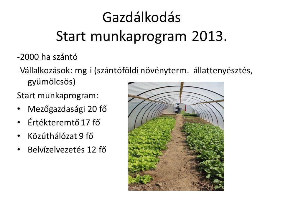 Gazdálkodás Start munkaprogram 2013. -2000 ha szántó -Vállalkozások: mg-i (szántóföldi növényterm. állattenyésztés, gyümölcsös) Start munkaprogram: Me