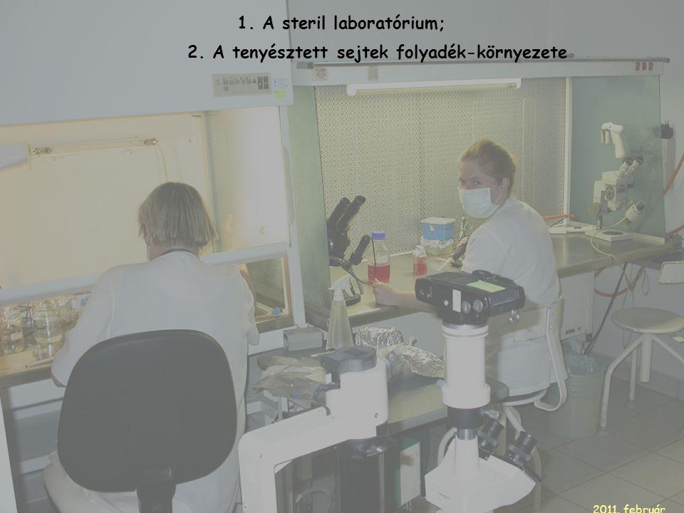 1. A steril laboratórium; 2. A tenyésztett sejtek folyadék-környezete 2011. február