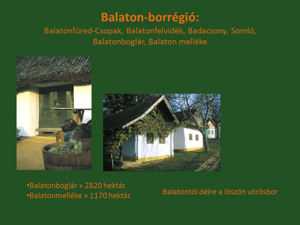 Balatonboglár » 2820 hektár. Balatonmelléke » 1170 hektár. Balaton-borrégió: Balatonfüred-Csopak, Balatonfelvidék, Badacsony, Somló, Balatonboglár, Ba