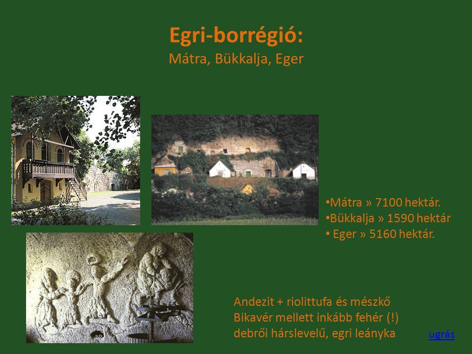 Egri-borrégió: Mátra, Bükkalja, Eger Mátra » 7100 hektár. Bükkalja » 1590 hektár Eger » 5160 hektár. Andezit + riolittufa és mészkő Bikavér mellett in