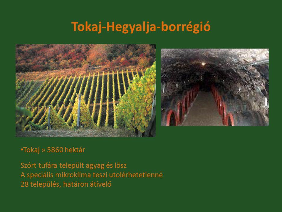 Tokaj-Hegyalja-borrégió Tokaj » 5860 hektár Szórt tufára települt agyag és lösz A speciális mikroklíma teszi utolérhetetlenné 28 település, határon át