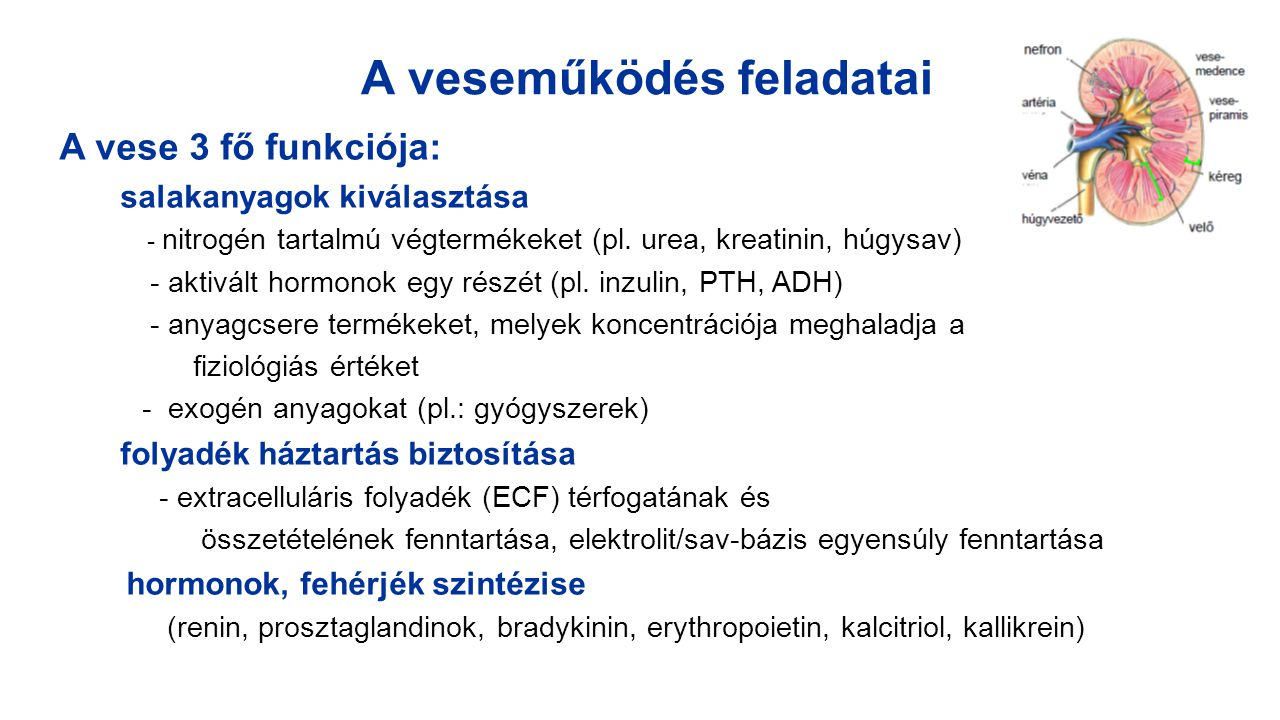Veseműködés biokémiai tesztjei 1./ A glomeruláris filtráció mennyiségi jellemzői: - GFR - clearance mérése - szérum kreatinin, karbamid, cisztatin C 2./ A glomeruláris szűrőfunkció minőségi jellemzői: - fehérje vesztés (proteinuria, Trf, IgG) - vér vesztés (haematuria, dimorf vvt-k) 3./ Tubuláris funkció tesztjei - mennyiségi jellemző: vizelet fajsúly, térfogat - minőségi jellemző: plazma mikroproteinek a vizeletben (α1-microglobulin, β2- microglobulin, retinolkötő fehérje-RBP ), glükóz a vizeletben (glycosuria), bikarbonát a vizeletben, enzimek a tubuláris sejtekből (pl.