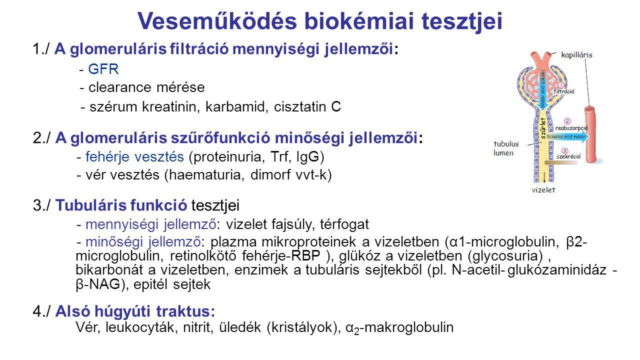 MDRD egyenlet MDRD study (1999.): főleg fehér rasszú nem diabeteses vesebetegek, életkor 51 +/- 12,7 év, átlagos GFR: 40 ml/perc/1,73m 2 Eredeti: GFR = 170 x (kor) -0,176 x (SCr x 0,0113) -0.999 x (urea x2,8) -0,17 x (albumin x 0,1) 0,318 x 0,762 (ha nő) x1,18 (ha fekete) További vizsgálat: rasszokra (afrikai amerikaiak, európaiak, ázsiaiak – eltérő izomtömeg és étrend), betegcsoportokra (diabeteses betegek vesebetegséggel vagy anélkül, májbetegek, vese transzplantáltak, potenciális vesedonorok)