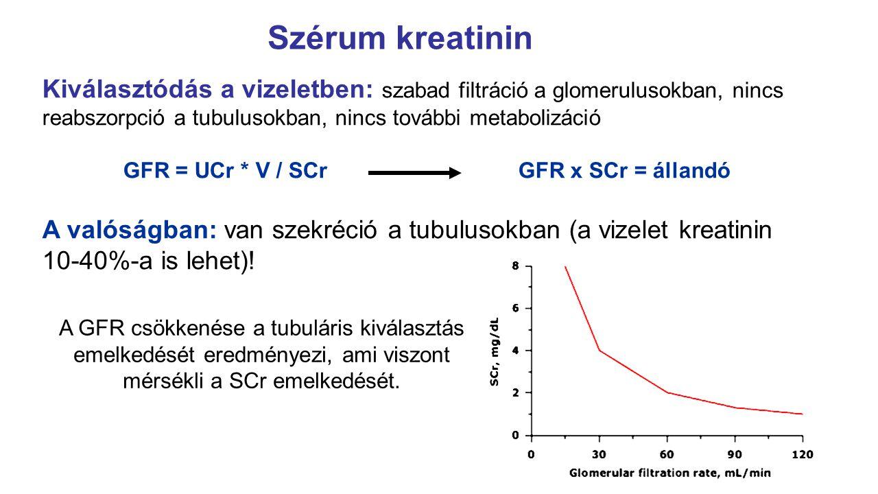 Szérum kreatinin Kiválasztódás a vizeletben: szabad filtráció a glomerulusokban, nincs reabszorpció a tubulusokban, nincs további metabolizáció GFR =