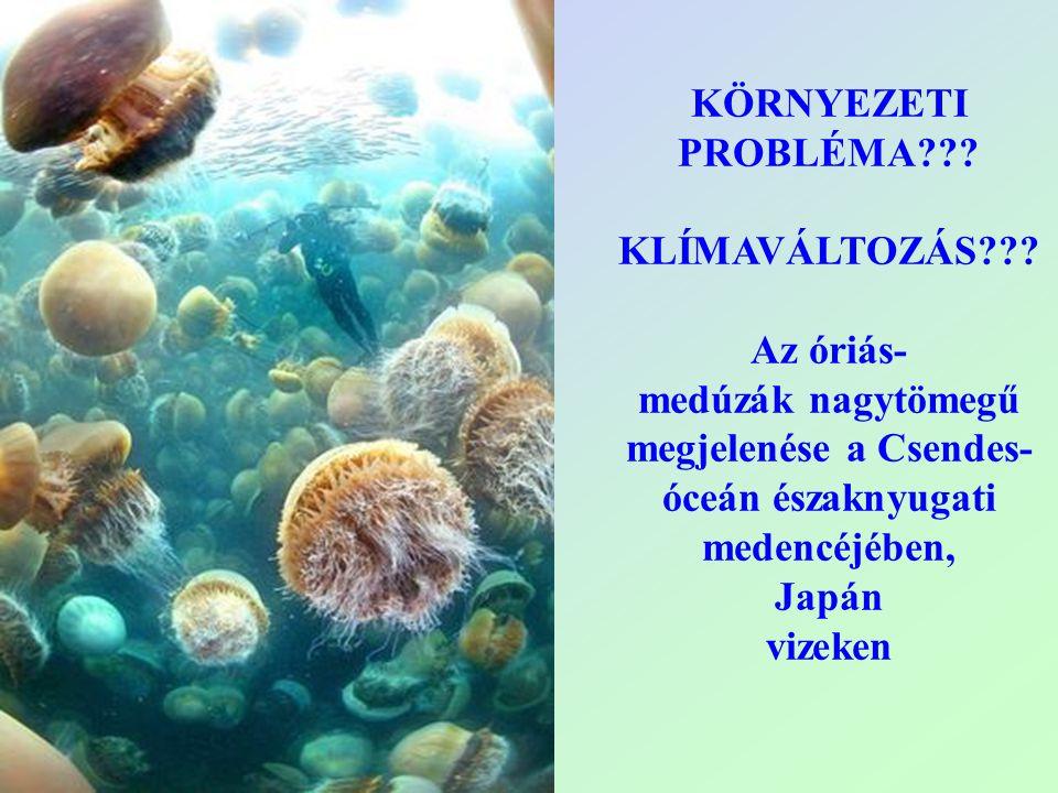 KÖRNYEZETI PROBLÉMA??? KLÍMAVÁLTOZÁS??? Az óriás- medúzák nagytömegű megjelenése a Csendes- óceán északnyugati medencéjében, Japán vizeken