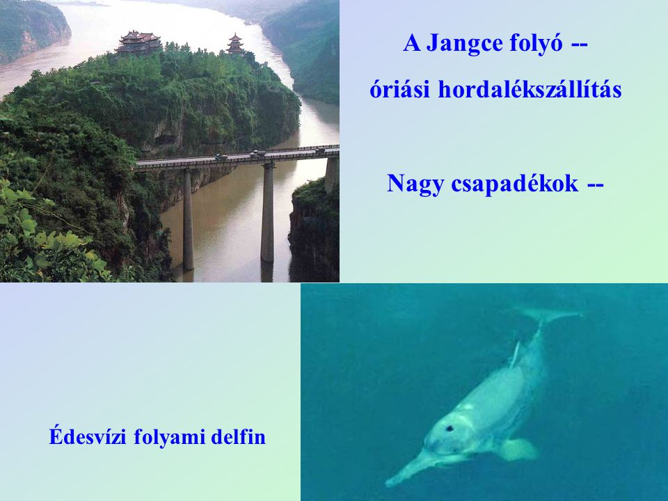 A Jangce folyó -- óriási hordalékszállítás Nagy csapadékok -- Édesvízi folyami delfin