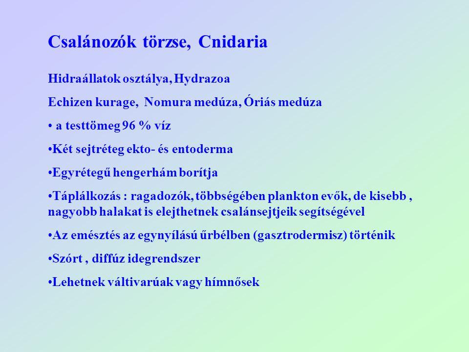 Csalánozók törzse, Cnidaria Hidraállatok osztálya, Hydrazoa Echizen kurage, Nomura medúza, Óriás medúza a testtömeg 96 % víz Két sejtréteg ekto- és en