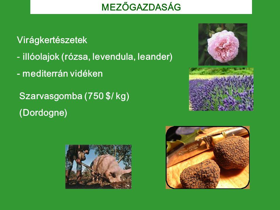 Szarvasgomba (750 $/ kg) (Dordogne) Virágkertészetek - illóolajok (rózsa, levendula, leander) - mediterrán vidéken