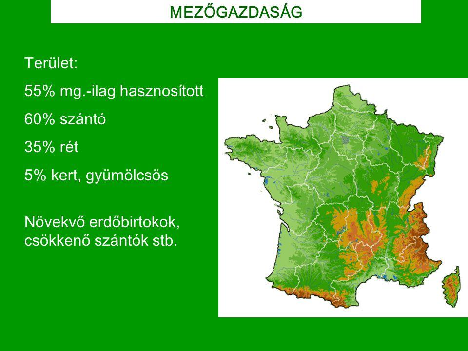 MEZŐGAZDASÁG Terület: 55% mg.-ilag hasznosított 60% szántó 35% rét 5% kert, gyümölcsös Növekvő erdőbirtokok, csökkenő szántók stb.