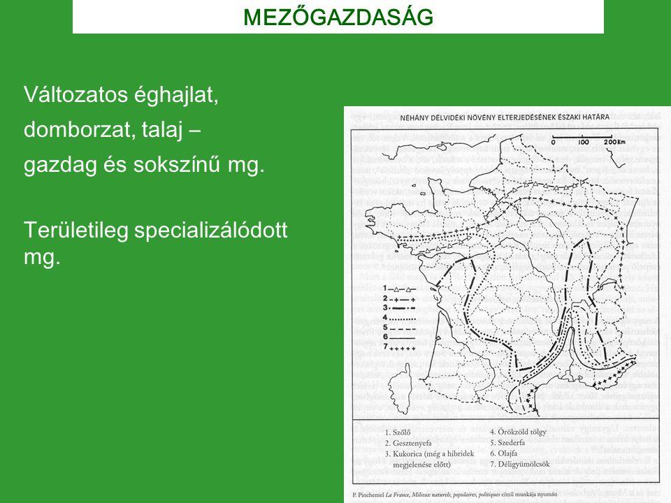 MEZŐGAZDASÁG Területileg specializálódott mg. Változatos éghajlat, domborzat, talaj – gazdag és sokszínű mg.