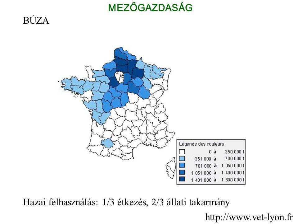 BÚZA Hazai felhasználás: 1/3 étkezés, 2/3 állati takarmány MEZŐGAZDASÁG http://www.vet-lyon.fr