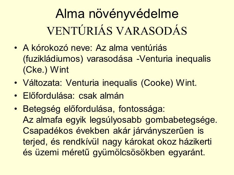 Alma növényvédelme VENTÚRIÁS VARASODÁS A kórokozó neve: Az alma ventúriás (fuzikládiumos) varasodása -Venturia inequalis (Cke.) Wint Változata: Venturia inequalis (Cooke) Wint.