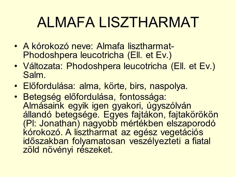 ALMAFA LISZTHARMAT A kórokozó neve: Almafa lisztharmat- Phodoshpera leucotricha (Ell.