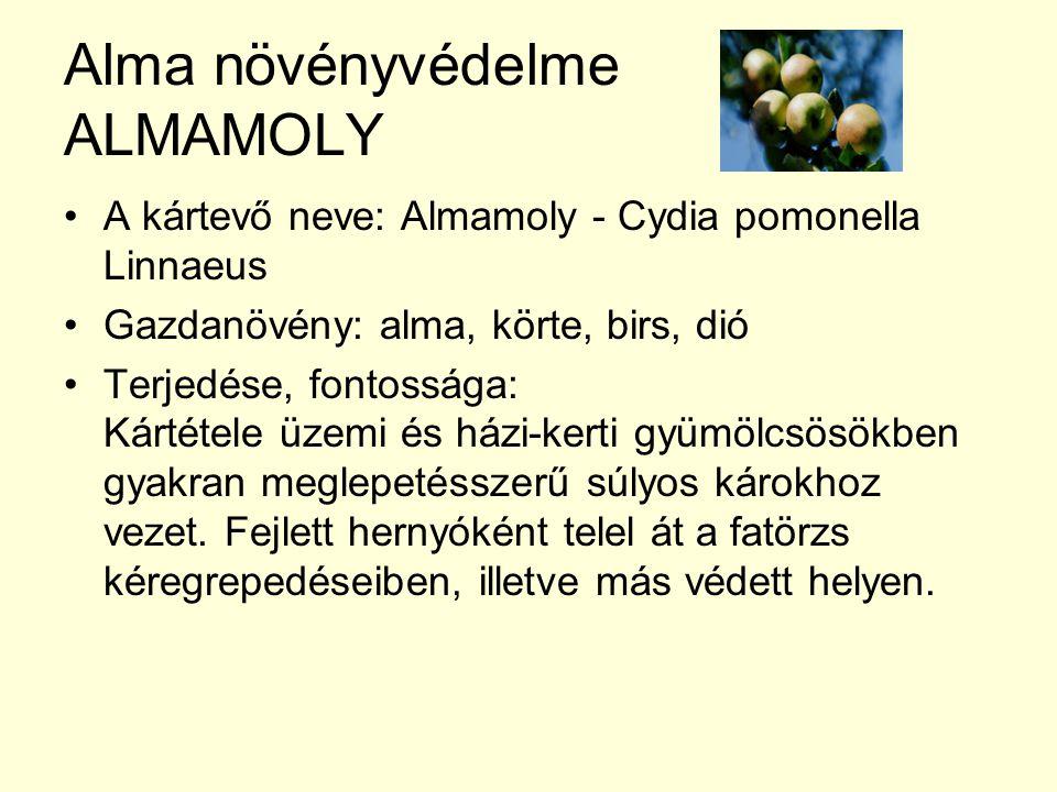 Alma növényvédelme ALMAMOLY A kártevő neve: Almamoly - Cydia pomonella Linnaeus Gazdanövény: alma, körte, birs, dió Terjedése, fontossága: Kártétele üzemi és házi-kerti gyümölcsösökben gyakran meglepetésszerű súlyos károkhoz vezet.